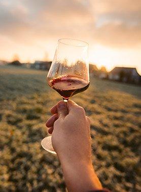 degustare-vino